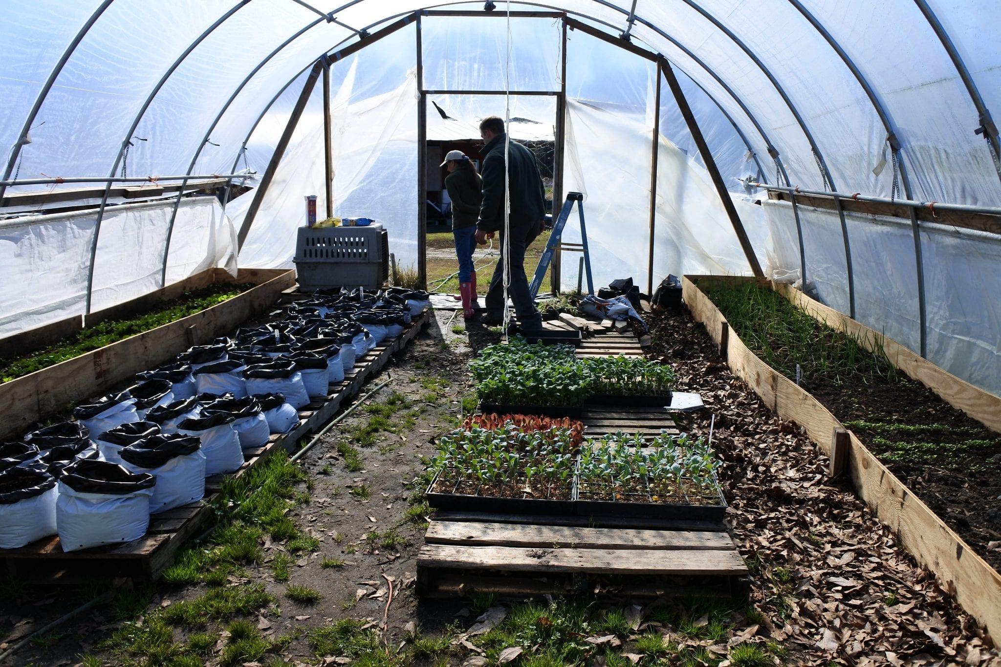 organic farm north carolina sustainability sustainable non-gmo small business grant startup agriculture